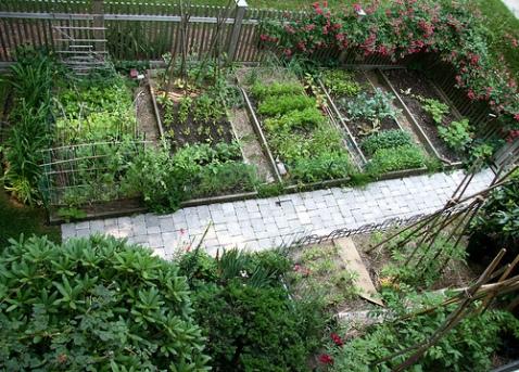 growing garden goodies