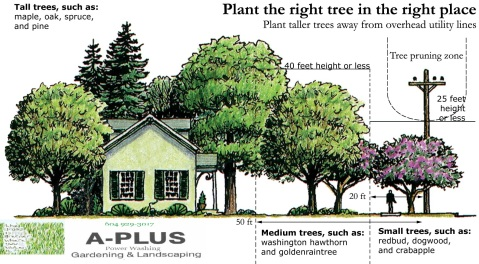 plant right tree place aplus